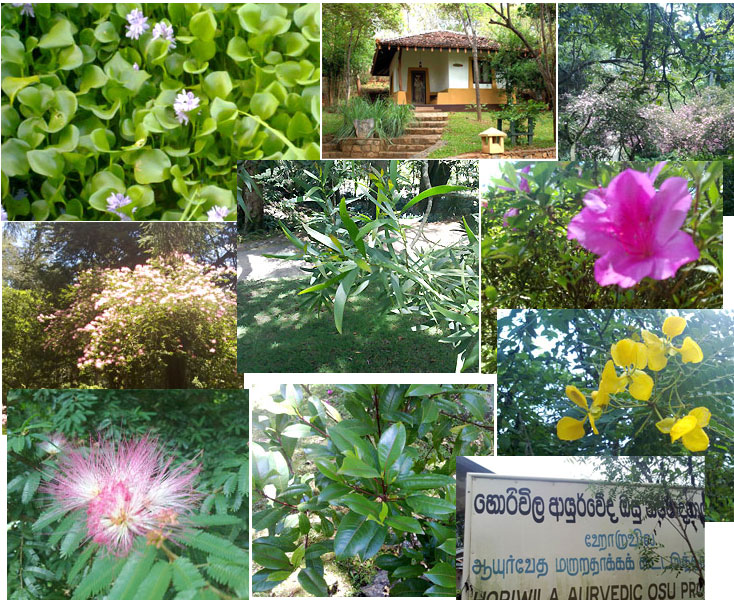 Horiwila Ayurveda Herbal Garden